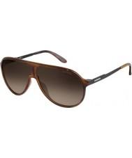 Carrera Ny mester 8f8 Ha Havana sorte solbriller